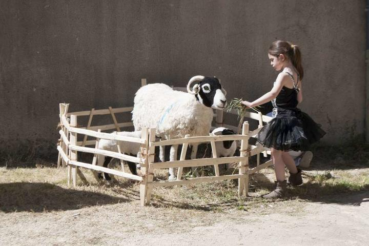 Projection : Addicted to Sheep (VOSTFR)